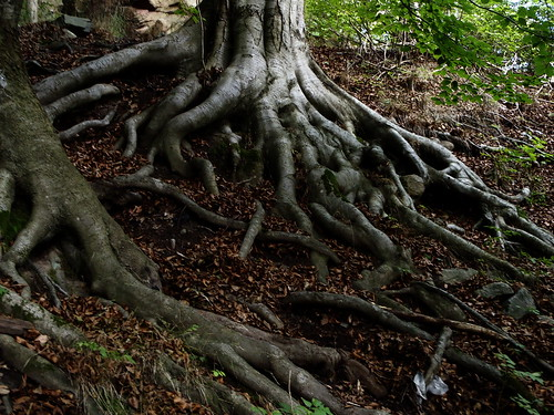Roots revisited I by Eva the Weaver, on Flickr