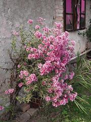 Cvijeće (2009.)