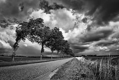 Dijk (robvanderwaal) Tags: road trees sky bw cloud tree netherlands clouds landscape blackwhite bomen track zwartwit nederland wolken dyke dijk polder dike weg landschap zw wolk 2014 rvdwaal robvanderwaalphotographycom