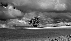 Light My Tree (AndyorDij) Tags: empingham england rutland uk 2014 trees tree hedgerow field monochrome mono blackandwhite bw summer harvest andrewdejardin