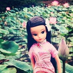 In a Chinese #waterlily #garden  #Love all the anniversary repro #Licca # from #LiccaCastle!!!  #pink #cheongsam #nostalgia #oldschool #  (TOETY LIANG) Tags: pink love garden waterlily oldschool nostalgia licca cheongsam   liccacastle