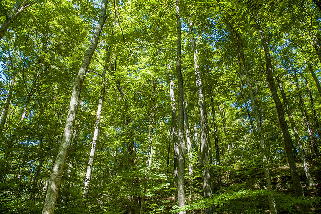 Clifty Falls State Park - Sept. 7, 2014