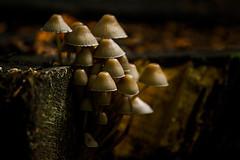 The underworld (mbernholdt) Tags: autumn green nature mushroom forest denmark moss details fungi foliage fungus leafs