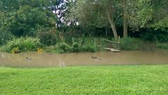 Hochwasser in der Selz