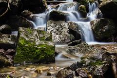 Mossy (IchiroPhotography) Tags: longexposure green wet water rock creek forest moss stream damp silky
