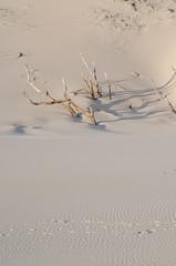 Dune de Bologna (Drics67) Tags: spain dune sable espagne tarifa andalousie estrecho cadix parcnaturel dunedebologna parcnatureldesestrecho parcnatureldudtroit