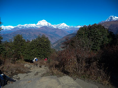Annapurna Base Camp trek, Nepal (Matt-Zimmerman) Tags: nepal camp trek base annapurna himalayas westernregion ghodepani