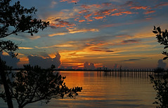 Lagoon Sunrise (tclaud2002) Tags: blue trees orange tree water clouds sunrise florida lagoon orangeandblue indianriver martincounty indianriverlagoon pwpartlycloudy sewallspointflorida