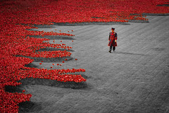 Beefeater and the poppies (80D-Ray) Tags: field poppies firstworldwar toweroflondon beefeater