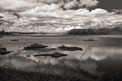 The Marsh -3- (CTfoto2013) Tags: clouds nuages stormy orageux light lumiere reflections reflets summer ete nuageux cloudy monochrome outdoors seascape landscape eau water forest salt marsh wells maine paysage ciel outdoor serene sky new england lumix gx7 panasonc serein etang marais marecages estuaire coast cote estuary field arbres trees roseaux noiretblanc bw nb bn blackandwhite texture saltmarsh estuarinereserve coteest eastcoast usa