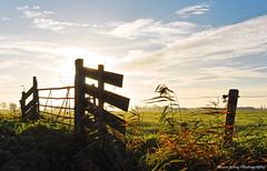 Sunrise fence (Johan Konz) Tags: sunrise fence silhouette rural firld grassfield sky outdoor landscape serene atmosphere nikon d90 cloud purmerland waterland netherlands