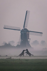 mill horses 2 (Bart Hardorff) Tags: 2016 barthardorff hellouw thenetherlands millmolen september hooglandsemolen voorstemolen molen mill windmill windmolen