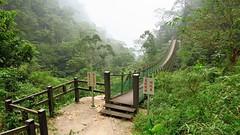 bridge (melodyben) Tags:  canong3x   tree green