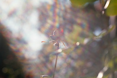 more.light (the.crystalimage) Tags: film filmphotography filmphoto filmcamera filmfeed filmlove filmisnotdead analogphotography analog ishootfilm analogue analoguephotography filmcommunity filmproject grain grainisgood 35mm jupiter zenit agfacolor100c flowers jupiter985mmf20 zenit122 epsonperfectionv550