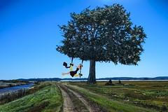 Swinging on the Big Tree (Rusty Russ) Tags: parker river wildlife refuge newburyport ma big tree forbidden path colorful day streetart digital graffiti europe mer lago window flickr country landschaft mare analog bright happy la paysage colour eos scenic america cielo market hill world sunset beach water sky flower red nature blue night white green art light sun cloud park landscape summer city yellow people pink house old new photoshop google bing yahoo stumbleupon getty interesting creative color surreal avant guarde