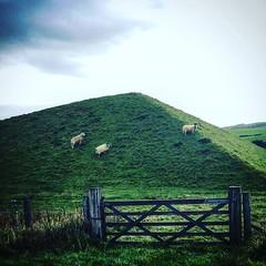 Pyramids Bathgate (heidiomond) Tags: pyramids bathgate livingston motorway walk sheep ewe