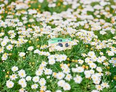 Quick Snap camera - 30th Anniversary - (Jerome Chi) Tags: 105mm f24 film 120 120film pentax pentaxcamera pentax6x7 pentax67 67 6x7 filmcamera lovefilm filmphoto filmisgood filmisnotdead filmphotography filmphotograph ishootfilm           kodak kodakfilm portra400