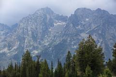 Mountain View Turnout (gunigantip) Tags: moose wyoming unitedstates gtnp grandtetonnationalpark grandtetons tetons nationalpark mountainview turnout