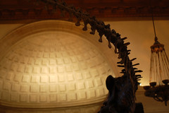 Cola y Media Cupula_5377 (Omar Omar) Tags: d40 nikond40 50mmlens 50mm 50milimetros 50millimeters playingwith50mm playingwith50millimeteres jugandocon50milimetros joueravec50mm nhm naturalhistorymuseum museumofnaturalhistory histoirenaturel museum muse museo losangeles losngeles losangelesca losngelescalifornia la california californie usa usofa etatsunis usono expopark expositionpark dinosaur dinosaurio coladedinosaurio dinosaurtail