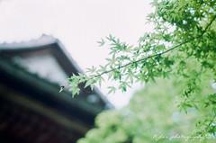 ( ()) Tags:   pentax m42 spf  film  supertakumar55mmf18 takumar 55mm f18 55 18 bokeh filmphotography rossmann 200 rossmann200