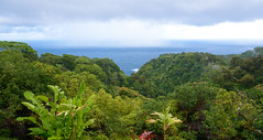 17279 (.kit) Tags: usa hawaii maui gardenofeden arboretum