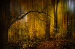 The gate ..... (radonracer) Tags: motionblur radonart forest herbst autumn arcen boeckelt