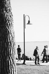 Skatin' (lorenzoviolone) Tags: bw blackwhite blackandwhite d5200 dslr dog fujifp3000b monochrome nikon nikond5200 reflex skating vsco vscofilm clearsky cliffside grass horizonontheland lakeside lamp pinetree sidewalk skateboard skater skaters sky streetphoto streetphotobw streetphotography tree treetrunk walk:trevignano=10162016 walking trevignanoromano lazio italy