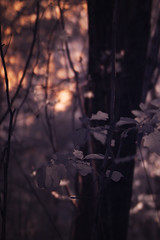 October 2016 in infrared 3 (furrycelt) Tags: northcarolina sigma50mmf14 sigma50mmf14exdghsm sonya3000 umsteadstatepark ianwilson jianwilson photographersoftumblr 50mm 665nm october sigma sony umstead a3000 forest furrycelt infrared ir lake leaves lensblr natural nature outdoors trees water woods