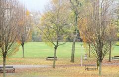 Giornata uggiosa (Eli.b.) Tags: albero autunno foglie pianta fall automne