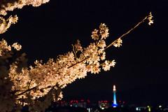 "Japan-1-0040- kyoto - sukara (david ""Djannis"") Tags:  japan japon kyoto  night nuit  tour tower higashiyama"