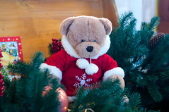 Christmas teddy bear in tree branches (lyule4ik) Tags: bear branch celebration christmas decoration gift green holiday ornament ornate red shiny teddy tree winter background border december festive fir new noel toy white wood xmas year art cold design greeting nature small pine beautiful wooden gold bow tradition evening fluffy furry brown bauble copy furtree party merry bright retro