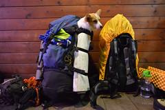 COCA---20160123-053512-LR (HYLA 2009) Tags: coca taiwan yhhsu mountain snow    co       trekking corgi