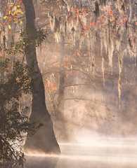 Autumnal Swamp at Dawn (Appalachian Hiker) Tags: fall autumn swamp sunrise daybreak mist fog morning quiet tupelo