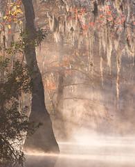 Autumnal Swamp at Dawn (Appalachian Hiker) Tags: fall autumn swamp sunrise daybreak mist fog morning quiet tupelo