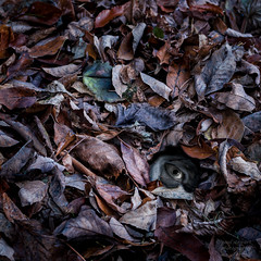 What Lies Beneath (paulstewart991) Tags: canon70d canadian spooky fall forest leaves scary dark nightmare composition fantasy meaford