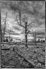 Trees Dead From Fire (r.yuill) Tags: monochrome blackwhite bw blackandwhite utah dead tree canyonland barren fire burn