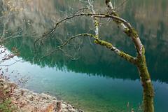 20161103-IMG_6117.jpg (diegofaria) Tags: austria autumn gosau gosausee fall vorderergosausee osterreich