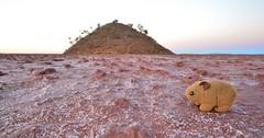 Lake Ballard (~Jek~) Tags: antonygormley art aus australia drylakebed geo:lat=2944697863 geo:lon=12060464858 geotagged insideaustralia lakeballard menzies sculpture westernaustralia