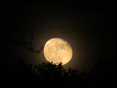 Moon -EXPLORE 17/11/16- (ambrasimonetti) Tags: moon luna explore today