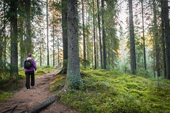 In to the woods (MiiaToivonen) Tags: seitseminen woods forest trees finland finnish suomi nationalpark national park view nature luonto landscape green hike vaellus path visitfinland