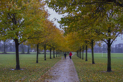 Walking to work in the rain (Dai Lygad) Tags: autumn weather cardiff wales rain rainy wet trees autumncolour fall 2016 november path park walkingtowork intherain jeremysegrott murky flickr world automme otoo eos camera canon 550d outside outdoors walk leaves tywydd hydref caerdydd pontcannafields orange geotagged creativecommons attribution attributionlicence attributionlicense freetouse image picture photo photograph photography photoforwebsite imageforwebsite pictureforwebsite photoforpowerpoint imageforpowerpoint pictureforpowerpoint resource pechakucha 20x20 photoforpresentation imageforpresentation pictureforpresentation rainyday pontcanna blogphoto blogimage blogpicture imageforblog pictureforblog photoforblog uk britain greatbritain walesuk