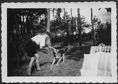 """Archiv K072 """"An der Ostsee, August 1937"""" (Hans-Michael Tappen) Tags: archivhansmichaeltappen drittesreich thirdreich nazigermany uniform hj hitlerjugend outfit hjkleidung outdoor freizeit hund schferhund tierliebe 1930s 1930er 1937"""