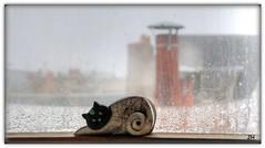 Sur les toits.. (au35) Tags: toits chat immeuble fenêtre windows cat