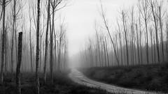 Niebla (muliterno) Tags: seleccionar camarillas