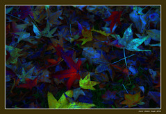 Autumn creativity (cienne45) Tags: creativitautunnale autunno creativit creativo colori foglie foglieecolori vivace astratto autumncreativity autumn leaves color creative creativity leavesandcolors lively abstract bose carlonatale cienne45 natale autumn2016