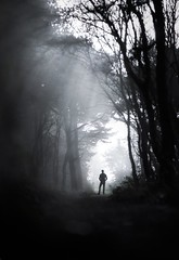 Are you coming with me? (Ben Lockett) Tags: track lodgebarn timer 85lii dof woodland woods pine trees fringe edge forest lane road dramatic mono black white dark light self 1740l 5d canon atmosphere sunshaft fog silhouette