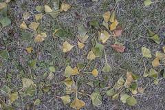 Erster Frost - 0016_Web (berni.radke) Tags: ersterfrost frost raureif wassertropfen rime eisblumen eiskristalle iceflowers icecrystals escarcha