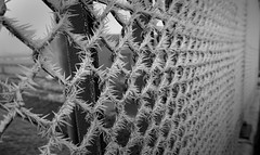 Natural barbed wire (cl manuel) Tags: winter december stacheldraht eis ice barbed wire frost reif hoar fence zaun