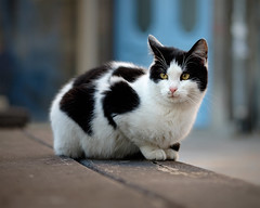 I Grew Up On These Streets (Yoan Mitov) Tags: stray street cat bench black white blue door dof bokeh december fuji fujifilm xt10 60mm f24 burgas bulgaria europe vignette