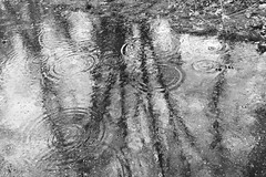 Ripples on a Reflection (brucetopher) Tags: black white blackandwhite bw blackwhite monochrome tone tones puddle water drop ripple wave raindrop raindrops rain raining weather wet obscure texture reflect reflection